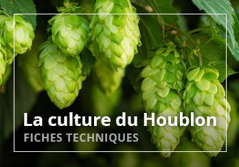 La culture du houblon